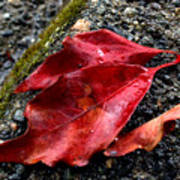Red Leaves And Concrete Poster