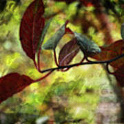 Red Leaves With Texture Poster