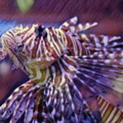 Red Lionfish Art Poster