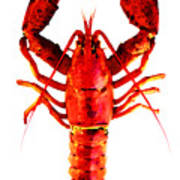 Red Lobster - Full Body Seafood Art Poster