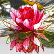 Red Lotus Flower Poster