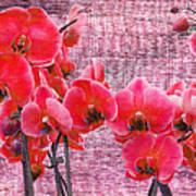 Red Orchids On Linen Zen Poster