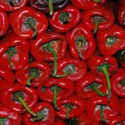 Red Paprika Poster
