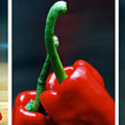 Red Pepper Triptych Poster