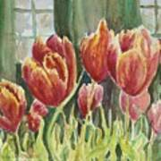 Red Pink Tulips Poster