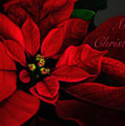 Red Poinsettia Merry Christmas Card Poster