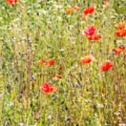 Red Poppies And Wild Flowers Poster