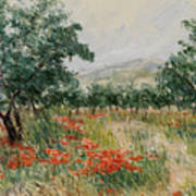 Red Poppies In The Olive Garden Poster