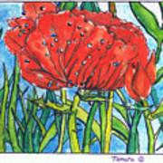 Red Poppy 1 Poster