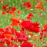 Red Poppy Flowers Meadow Art Prints Poppies Baslee Troutman Poster