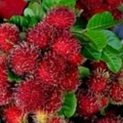 Red Rambutan And Green Leaves Poster