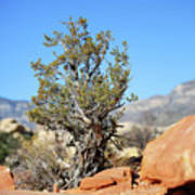 Red Rock Canyon Nv 4 Poster