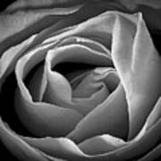 Red Rose In Infrared Poster