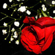 Red Rose With Baby Breath Poster