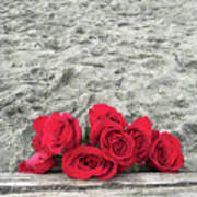 Red Roses Beachside Poster