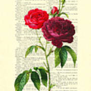 Red Roses For Valentine Poster