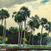 Red Shirt Homosassa Florida Poster