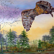 Red Shouldered Hawk Poster