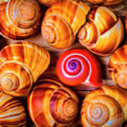 Red Snail Shell Poster