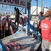 Red Snapper Catch Poster