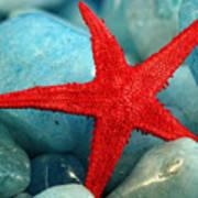 Red Starfish Poster