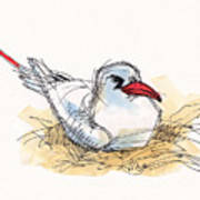 Red-tailed Tropicbird On Aitutaki Poster