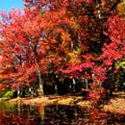 Red Trees By Lake Poster