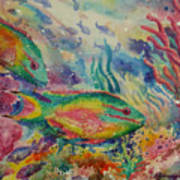 Redband Parrotfish Poster