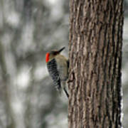Redheaded Woodpecker Poster