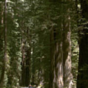 Redwood Highway Poster