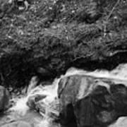 Redwood Rushing Stream 2  Poster