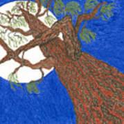 Redwood Tree Poster