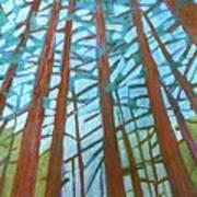 Redwood Trees Poster