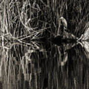 Reeds And Heron Poster