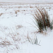 Reeds And Snow Poster