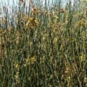 Reeds II Poster