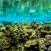 Reef At Ahnd Atoll Poster