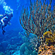 Reef Dive Poster