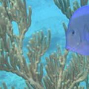 Reef Tang Poster