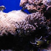Reef Tank Poster