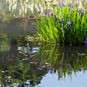 Reflecting Pond Poster