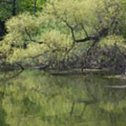 Reflecting Spring Green Poster