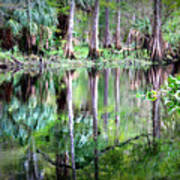 Reflection Of Cypress Trees Poster