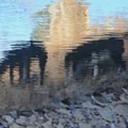 Reflection Of Dogs Poster