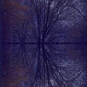 Reflection On Trees In The Dark Poster