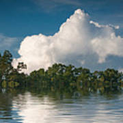 Reflections Of Trees And Clouds Poster