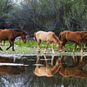 Reflections Of Wild Horses In The Salt River Poster