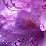 Refreshing Rain Close Up Poster