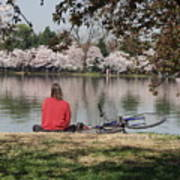 Relaxing Under Cherry Blossoms Poster