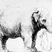 Rembrandt: Elephant, 1637 Poster